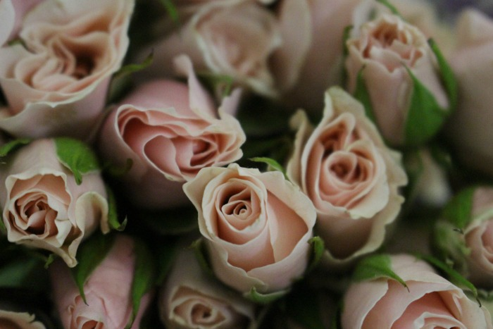 Blush Spray Roses