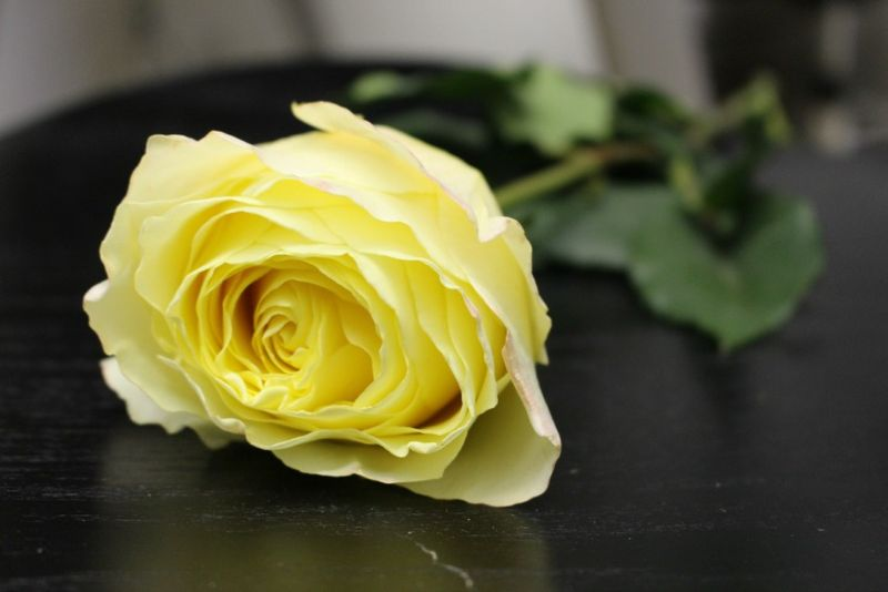 Yellow Campanella Rose photo by Blank Slate Events and Floral Design NYC