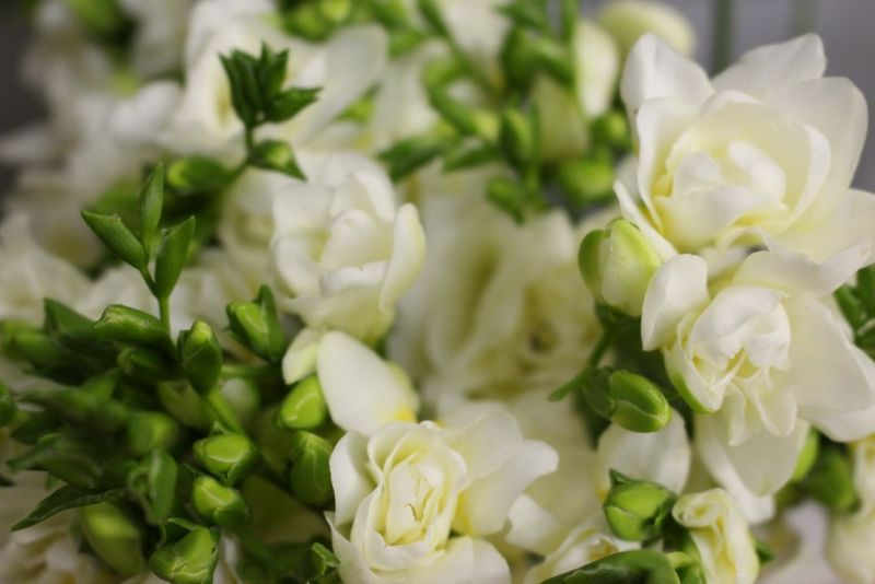 Ivory Freesia photo by Blank Slate Events and Floral Design NYC