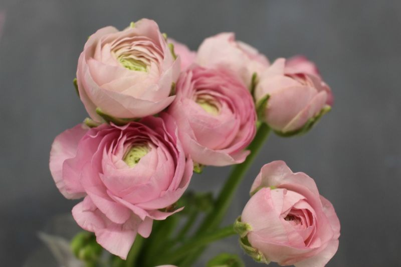 Pale Pink Ranunculus photo by Blank Slate Events and Floral Design NYC